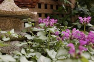 Tibetan Garden
