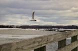Seagull Salt Marsh Trail IMG_8149