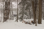 QC Woods in the Snow IMG_8589